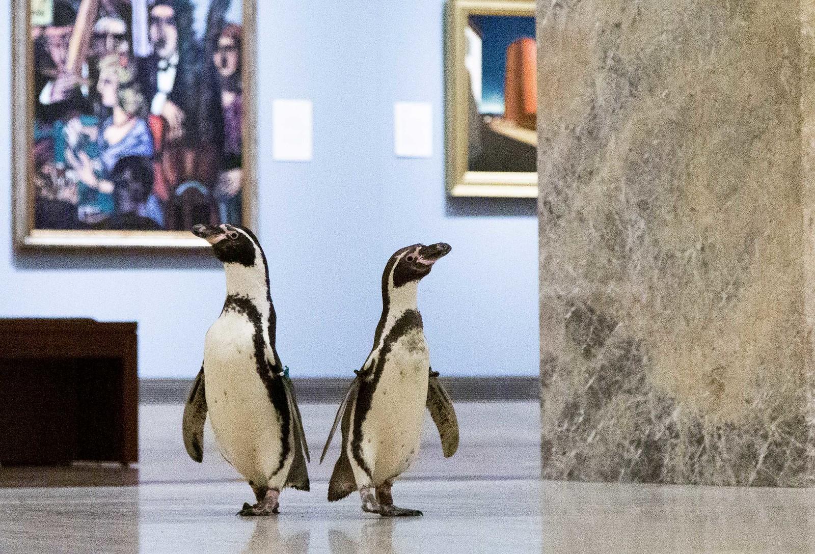 NPR-1516_Penguins-238