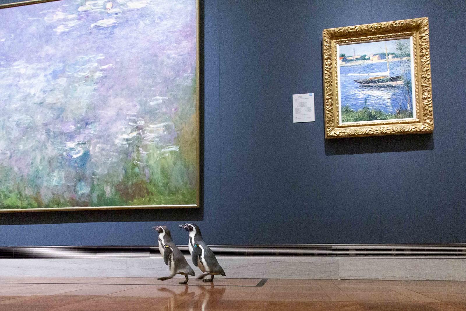 NPR-1516_Penguins-117