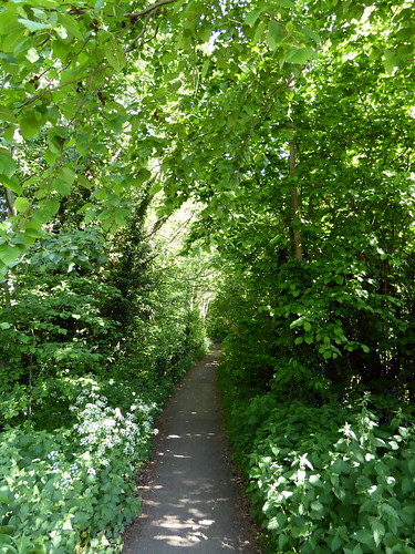 Narrow Pathway Not Taken