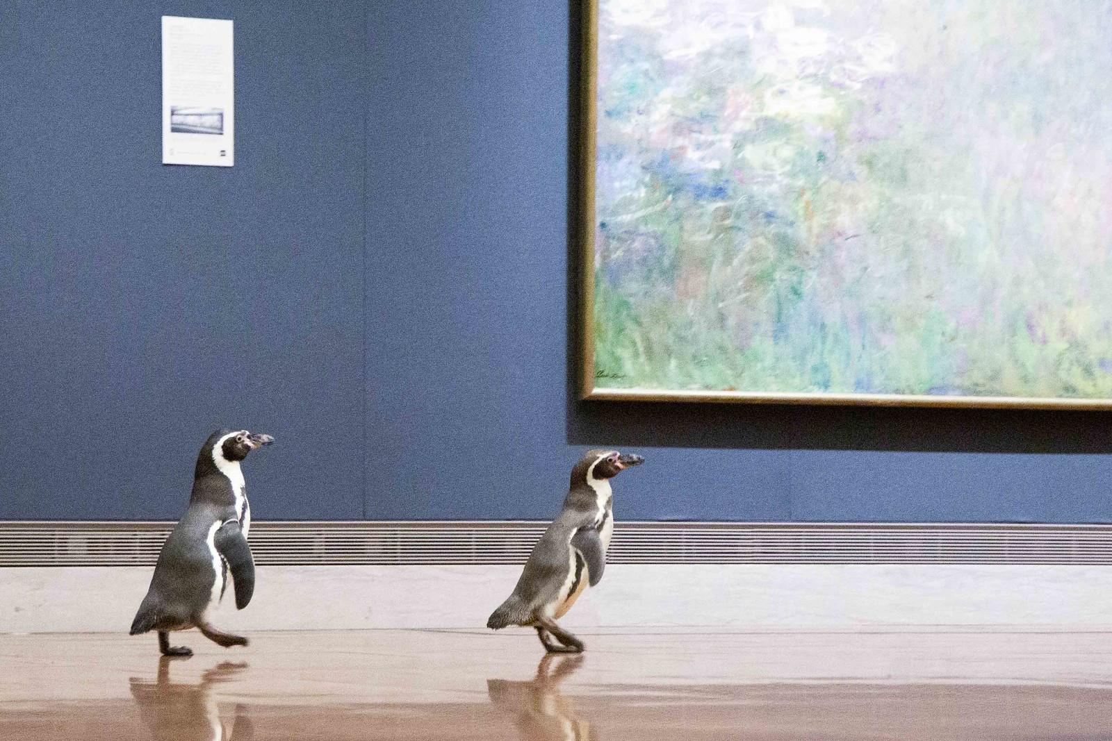 NPR-1516_Penguins-110