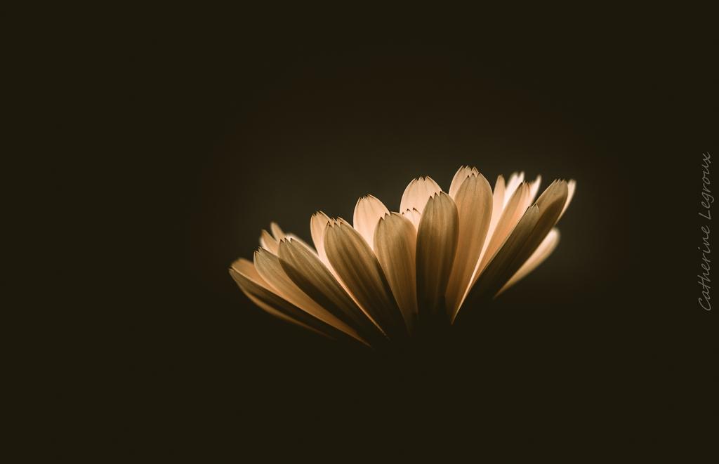 Flore - Page 6 49896176273_19d5c9f154_o