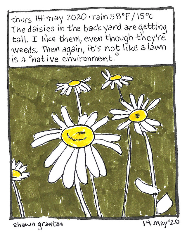 Journal Comic, 14 May 2020. Daisies.