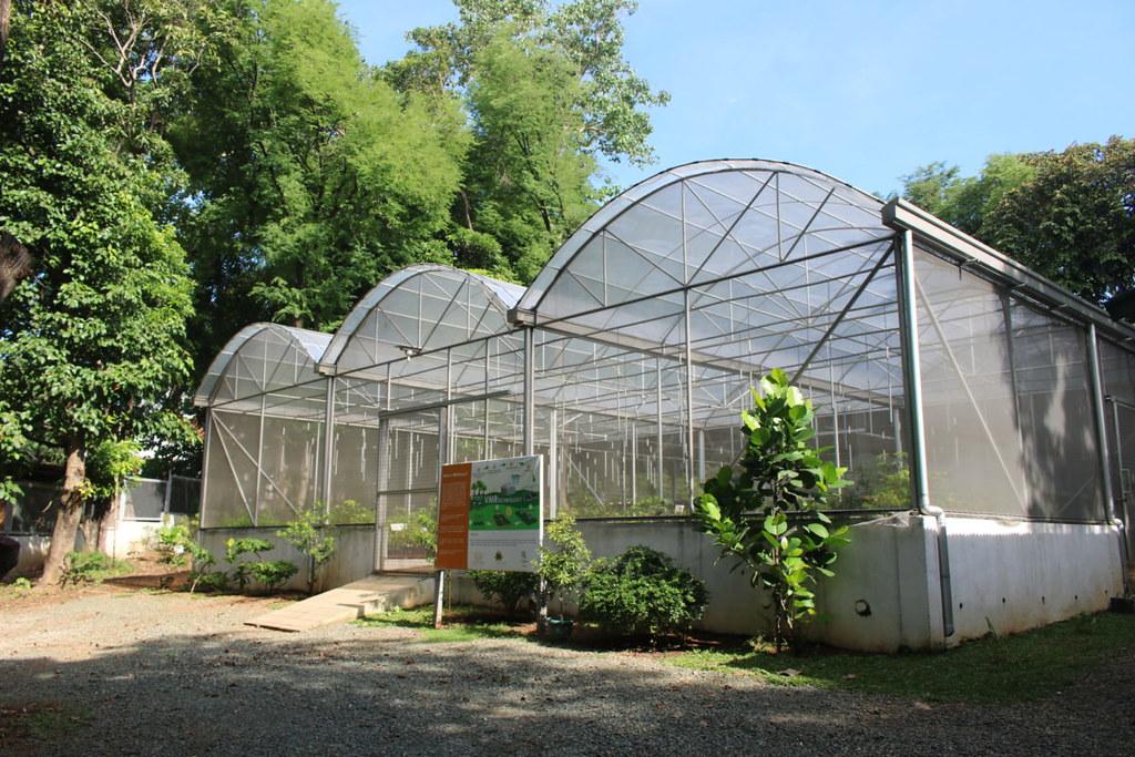 EDC在安蒂波洛市建有嘗試培育芽苗的苗圃