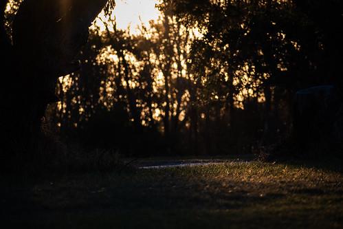 sunset light meadow rays grass nature