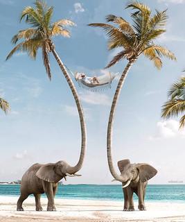 Photo Manipulation Elephant Coconut Tree
