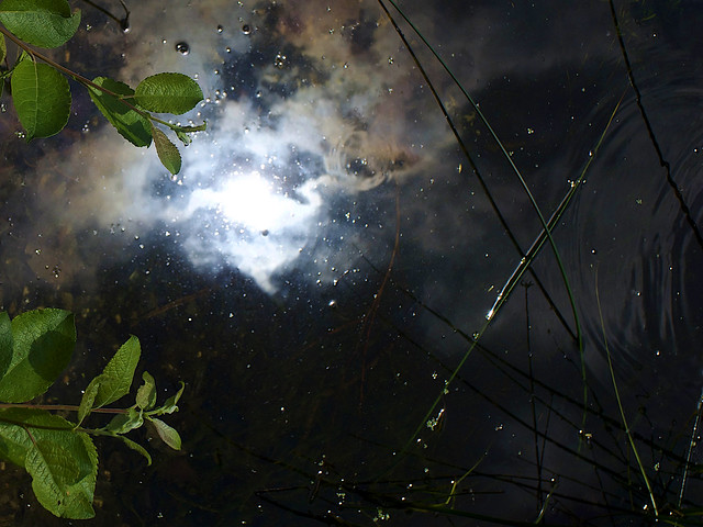 Universe in the Pond