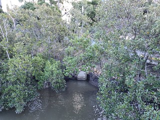 Little Creek outlet Brisbane River