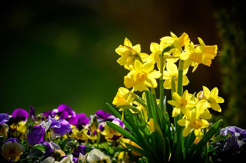 Frühjahrsboten