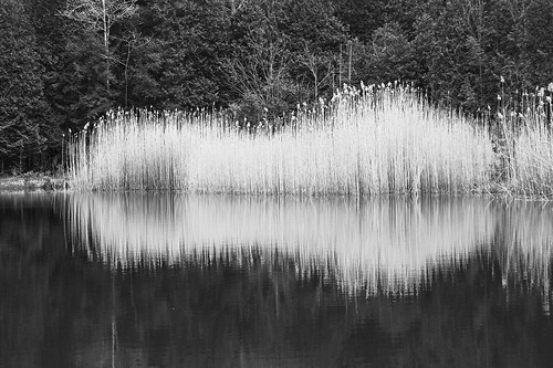 tgif friday life covid19 outdoor hike hiking adventure nature landscape bw blackandwhite peaceful pond reflection abstract canon 2020
