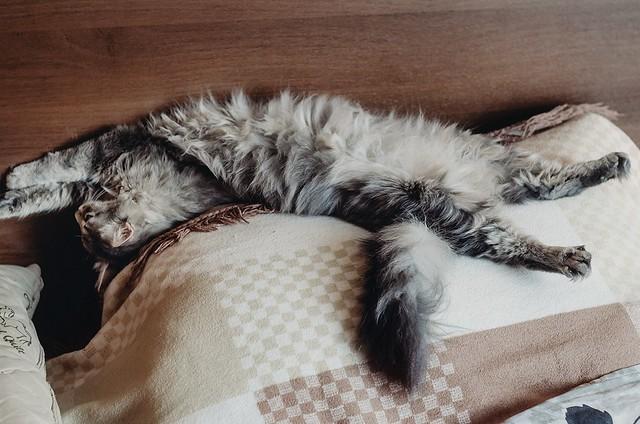 Kitty on vacation