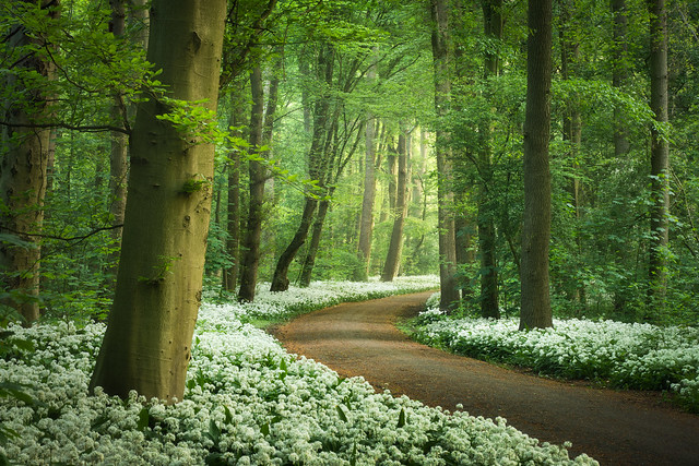 Garlic Forest