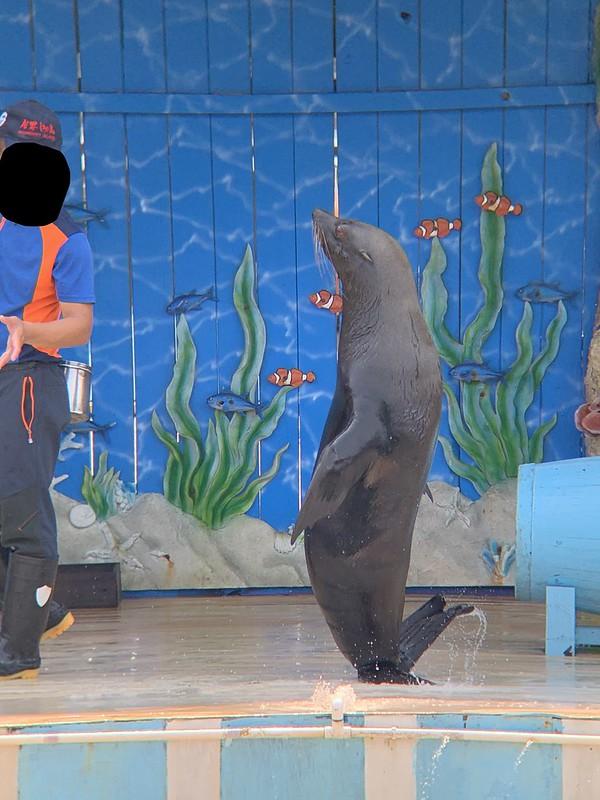 Fenjie Island Ocean Museum  April 2020 (4)