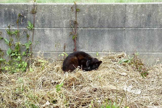 Today's Cat@2020ー05ー15