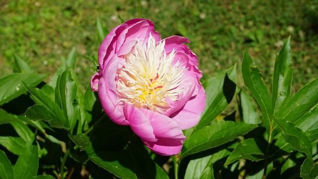 Flor en la ruta del Juanar!!! 4