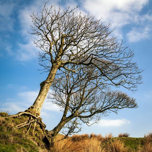 bank countryside landscape spring trees uk unitedkingdom clouds europe grass roots sky springtime preston england