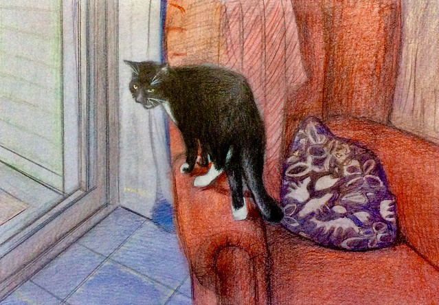 I want to go out NOW. Jenkins this morning. Coloured pencil drawing on card by jmsw. Last stage of 3. Just for Fun.