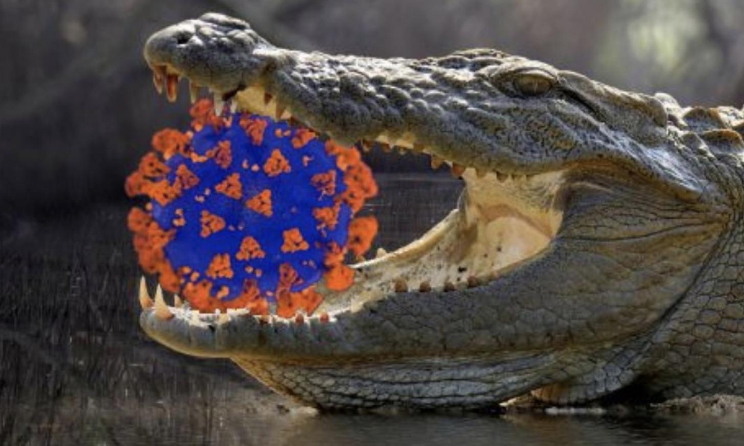 Coronavirus with gator