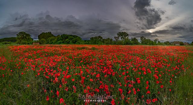 paisajes flores y cielos-2.JPG