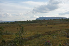Beautiful area switching between open fell and mountain forrest.