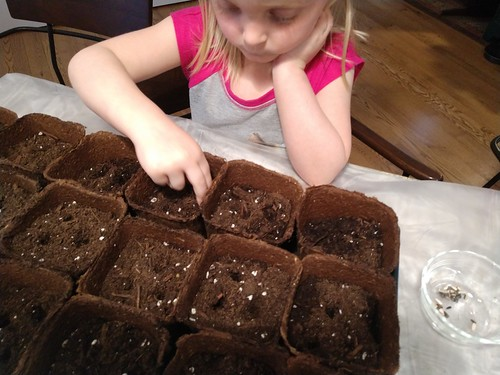 planting sunflowers