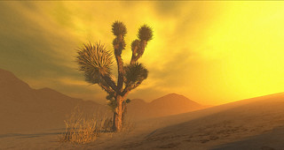 The Joshua Tree | by Carolyn Phoenix - falling down and reborn... like