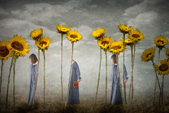 Sunflower Surrealism