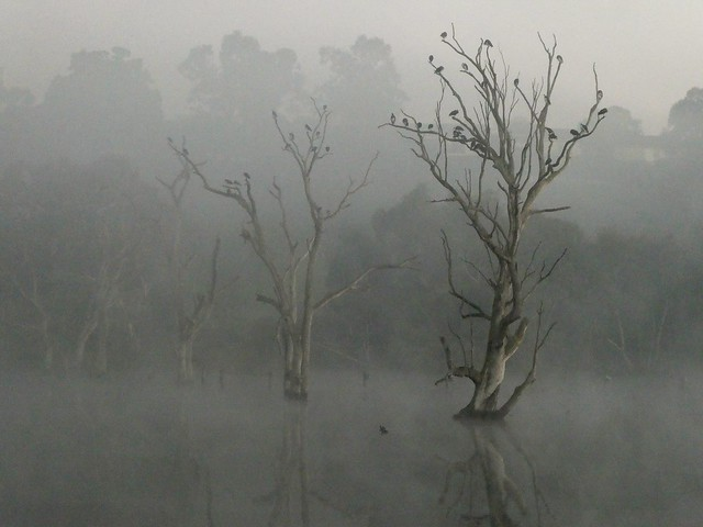 Early morning Banyule Swamp