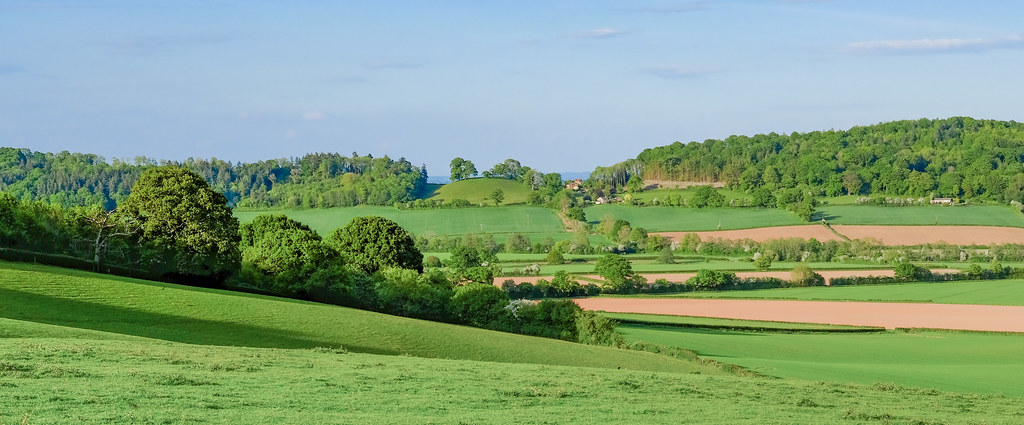 A panorama of bright green fields, with a few of light brown earth, and a small round hill in the distance