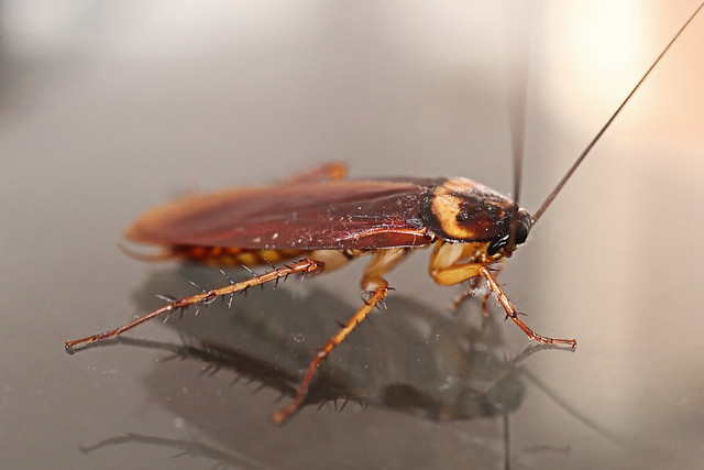insect 7
