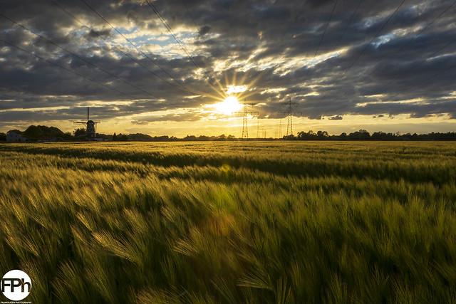 A Barley Field at Sunset