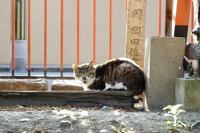 Today's Cat@2020ー05ー16