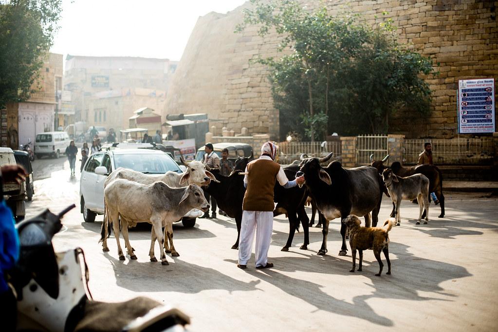 jaisalmer, 2019