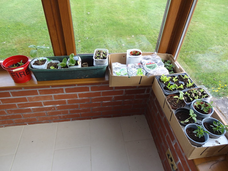 Seedlings snapshot