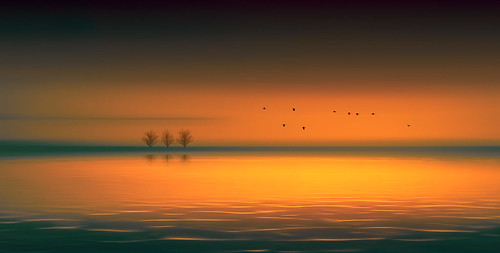 sea lake water dramatic view seascape birds flying flight sunset colors trees horizon silhouette surreal flowing glowing flowingandglowing