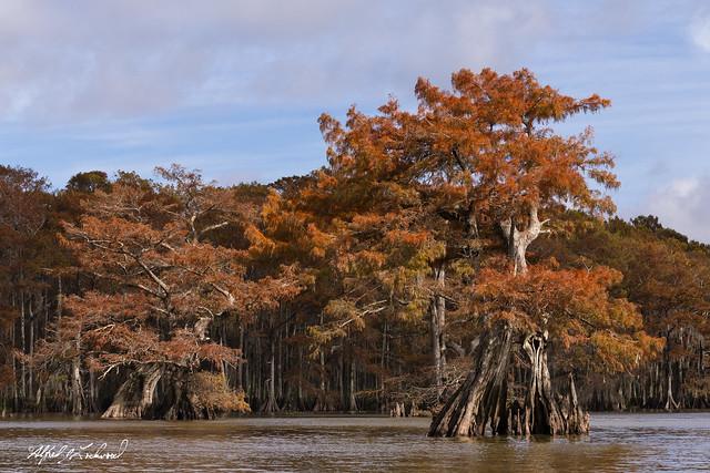 Autumn Blazing in the Bayou_MG_6582