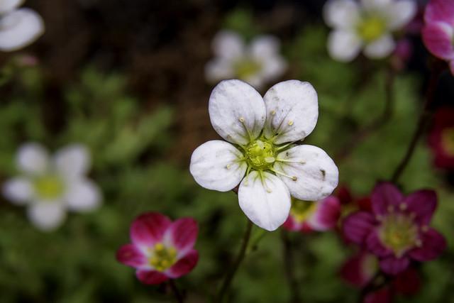 Fleuraison.