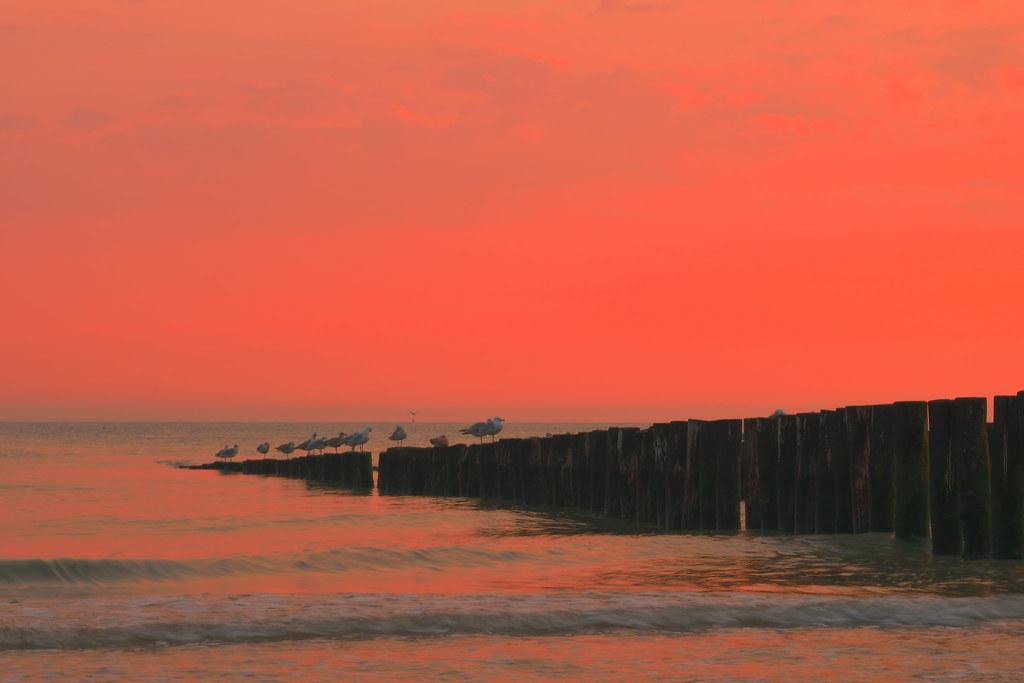 Seagulls are enjoying the sunset