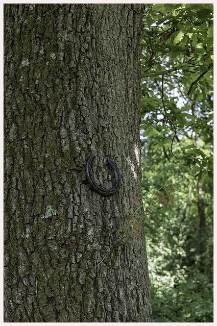 Pamber Forest, Hampshir