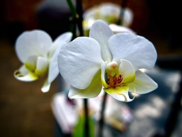 Fleurs du Mal........