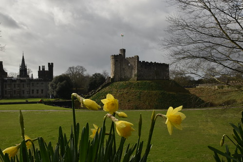 Daffodils and The Keep