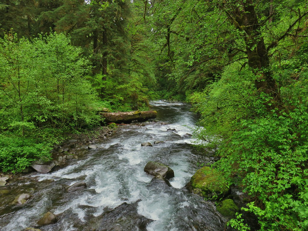 North Fork Siletz River