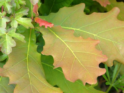 Leafy Details