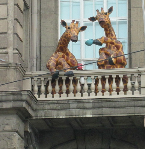 Giraffes in Helsinki, Close-up