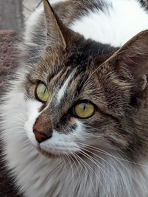Katty (Smartphone Blu G9)