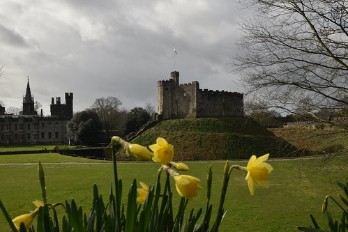 The Keep & Daffodils