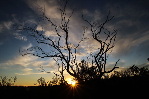 tree sunset manlydam silhouette