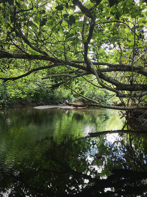 viidakko (12)