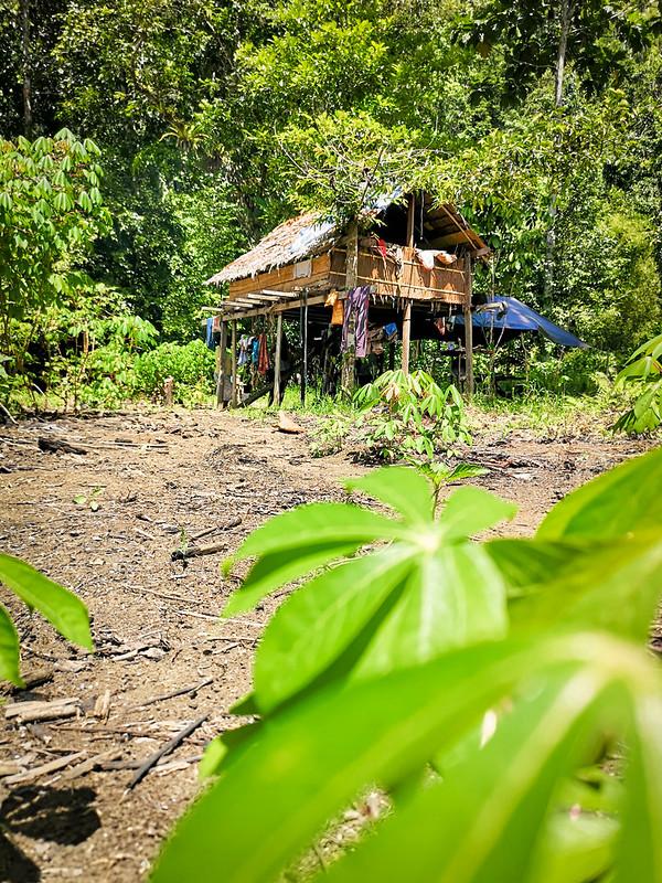 viidakko (21)