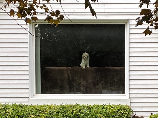 Doggy and Window