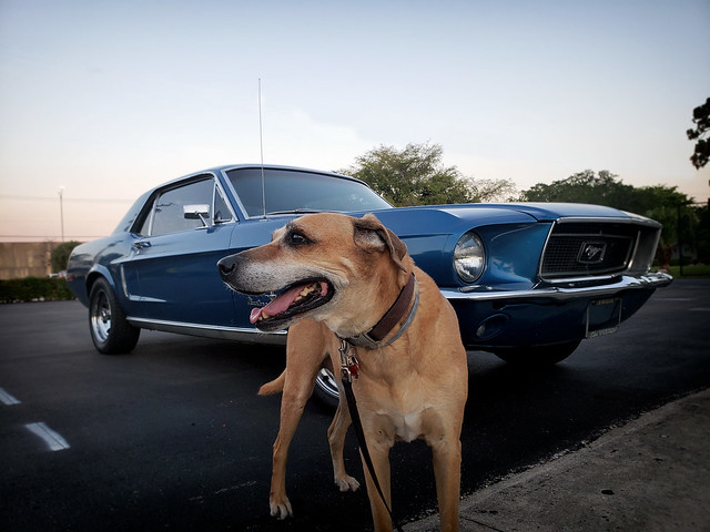69 Ford Mustang With and Without Dadass Dog